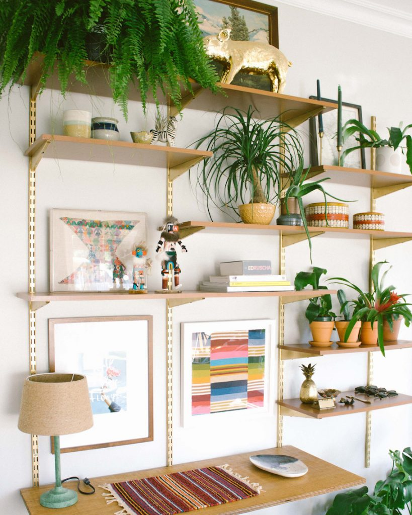 Plants You Can Grow In Your Dorm Room