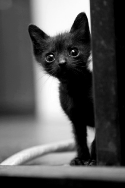 Superstitions and their Origins