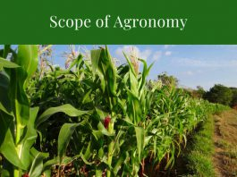 Scope and Career Prospects of Agronomy